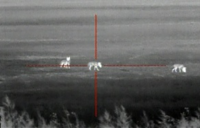 Thermal Scope View